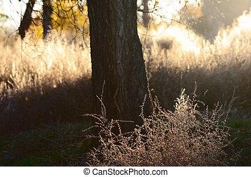 First Light - First light of rising sun floods the forest...