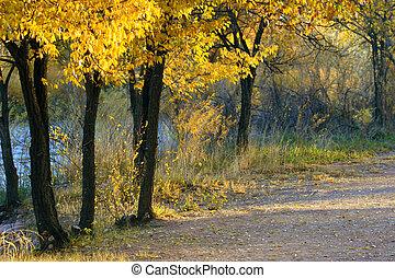 Fall Foliage - Beautiful golden foliage along path along the...