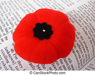 Poppy  40968 - Poppy with a bible