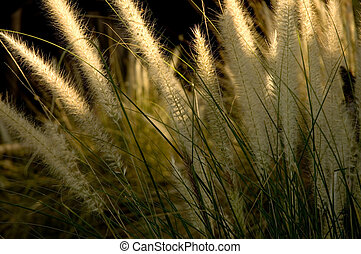 Pond Grass - Tall pond grass growing next to a pond, early...