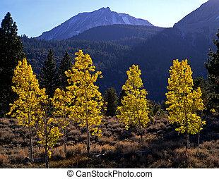 Aspens&MtDana(H) - Aspen trees and Mt. Dana in Yosemite...