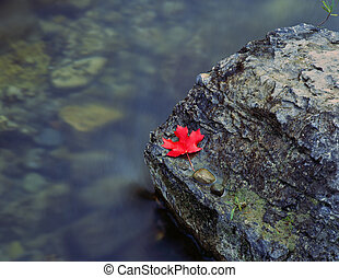 CanyonMapleLeaf - A canyon maple leaf on a rock in the Logan...