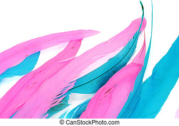 colorful feather - isolated colorful feather for background