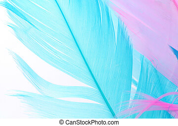 colorful feather for background