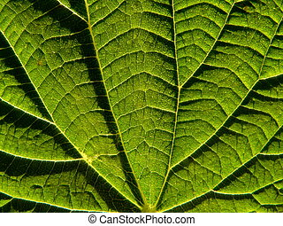 Leaf of the nettle