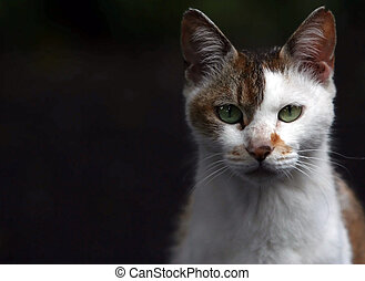 Cat\\\\\\\'s sight - Brownish-white cat looking straight at...