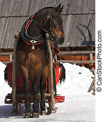 Sledge - Horse with the sledge