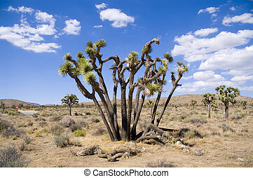 Blue Sky Joshua Tree - A twisted, gnarled Joshua Tree in...