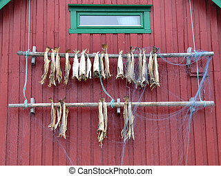 Dried fish in Norway - Fish dried in traditional way