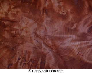 Tree Ring Pattern - View of the cut off end of a tree trunk...