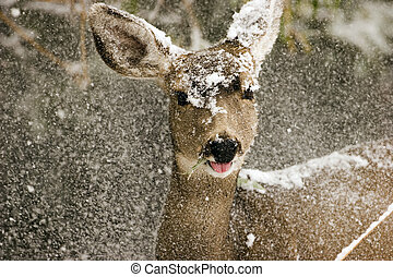 deer in the snow - a deer in the snow