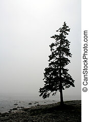 Lonely Pine - A single lone pine tree silhouette along the...