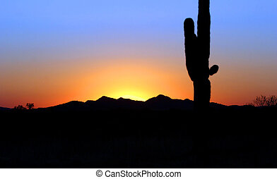 Saguaro cactus agains the sunset background. Picture taken...
