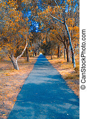 Bike Track Autum - autumn bike track bike track for walking...