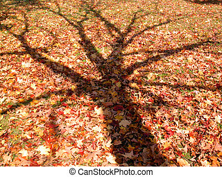 fall tree skeleton - shadow of a leafless tree cast across...