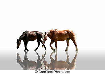 Horses - a pair of horses reflect on a silver floor