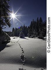 Snow and footprints - Snow footprints