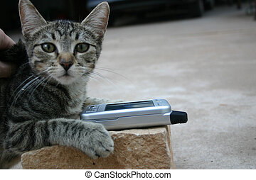 Tiger striped kitten - With a phone
