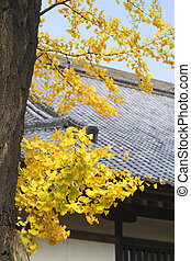 Autumn Japanese temple roof