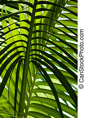 Jungle - Palm leaves overhead in a tropical jungle