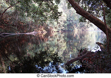 Water reflection - Rain River - Taman Negara National Park -...