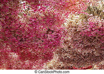flowers - Ceiling from Bouquets of dried flowers
