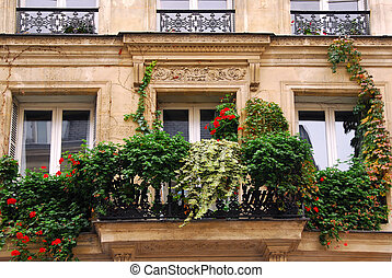Windows with ivy - Windows and balacony covered by ivy on a...