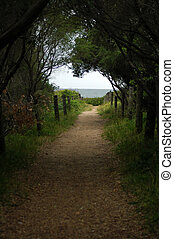 footpath to ocean - gravel footpath to ocean surrounded by...