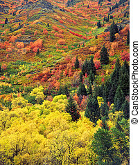 AutumnTapestryV - Fall colors on a hillside in the...