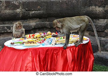 Monkeys dig into the food at the annual Monkey Buffet...