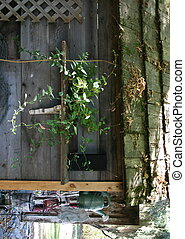 Old garden shed with plant