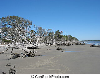 Beach Erosion - Fallen trees due to erosion, Jekyll Island,...