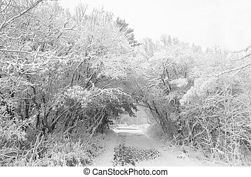 Winter scene - Walking path way during a winter storm