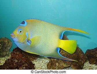 Colored fish in close