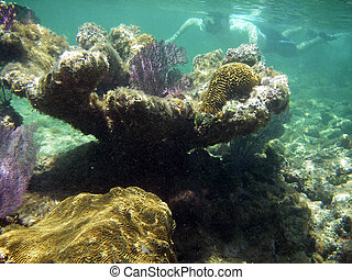 Snorkeling in Coral Reef - Snorkeling Man Swimming in the...