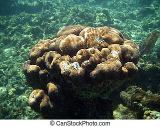 Fancy Underwater Coral in Great Barrier Reef