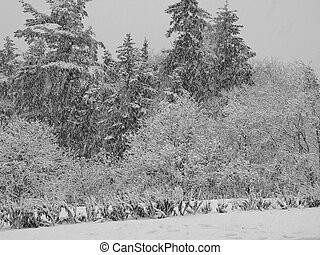 Snow day - A winter storm in black and white