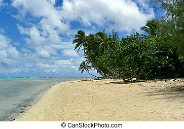 Muri beach - Palms and some other trees at the beach of Muri...