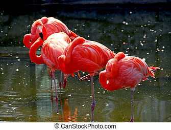 Flamingoes - Several colorful pink flamingoes standing in...