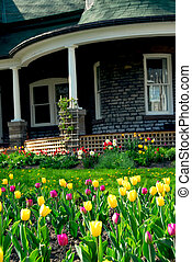 House in spring - Old house in spring with blooming tulips...