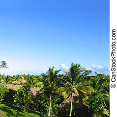 Fijian view Green palms agains the blue sky