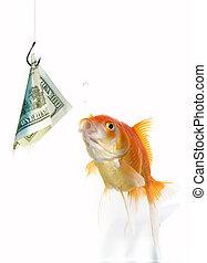Goldfish and dollar - Goldfish hunting for 100 dollars...
