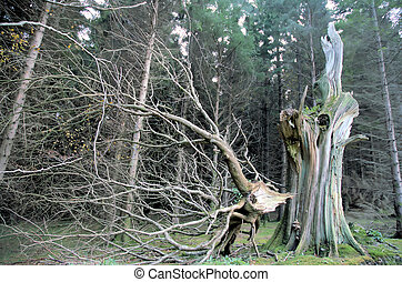Wicklow 1 - Damaged tree