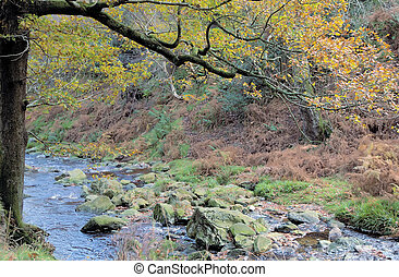 Wicklow 4 - River stream in autumn in Ireland