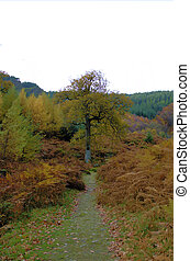 Wicklow 5 - Irish Autumn trees