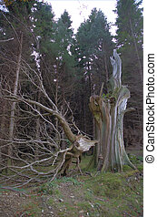 Wicklow 6 - Damages tree