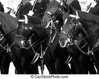 Cavalry 001 - A line of horses stand to attention as part of...