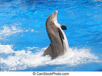 Dolphin swiming - Bottlenose dolphin swiming useing its tail...