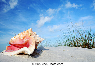Tropical Conch - Tropical beach with vegetation and pink...