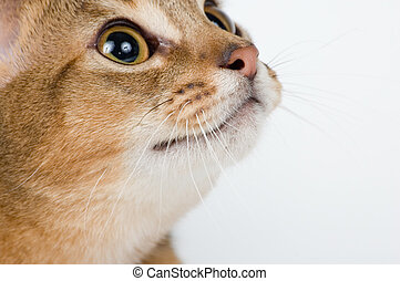 The kitten on a white background with interest looks...